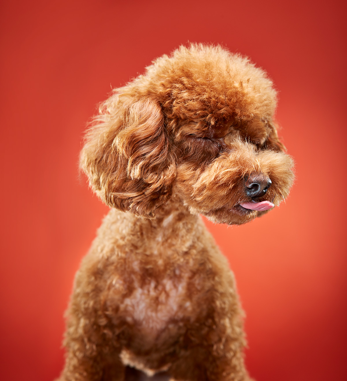 Pet Photography of Dog